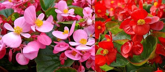 langage des fleurs signification des fleurs offrir un bouquet de fleurs. Black Bedroom Furniture Sets. Home Design Ideas