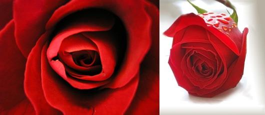 Langage Des Fleurs Signification Des Fleurs Offrir Un Bouquet De