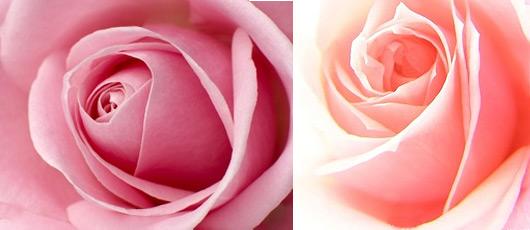 Langage des fleurs signification des fleurs offrir un bouquet de fleurs - Signification rose rose ...