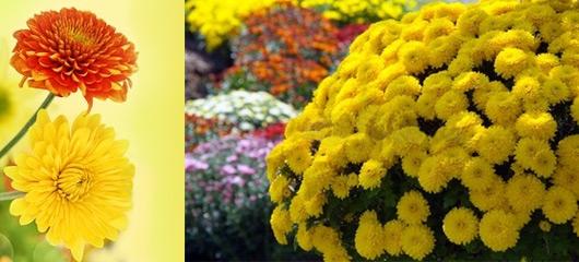 Langage des fleurs signification des fleurs offrir un for Offrir un miroir signification