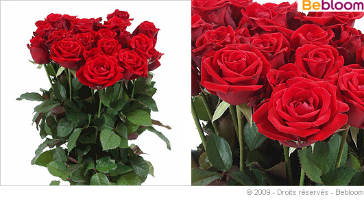 bouquet-fleurs-21-roses-rouges.jpg
