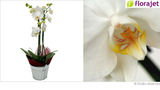 livraison-orchidee-blanche.jpg