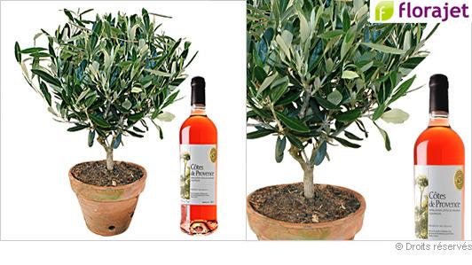 plante-olivier-vin-rose.jpg