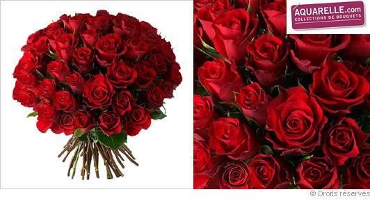 offrir-des-roses-rouge-velour.jpg