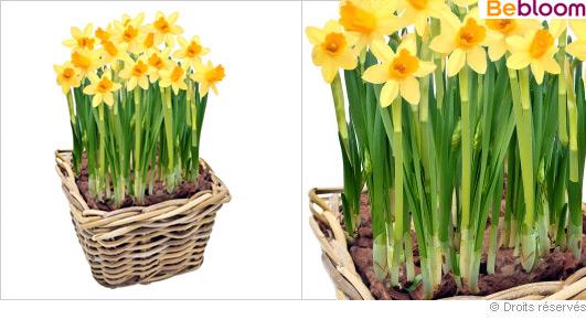 composition-florale-jonquilles.jpg