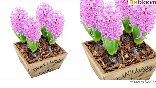 livraison-fleurs-jacynthe.jpg