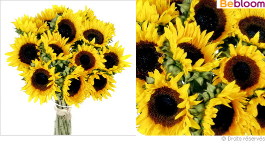 bouquet-de-tournesol.jpg