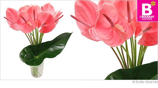 Bouquet exotique part 2 for Fleurs offrir