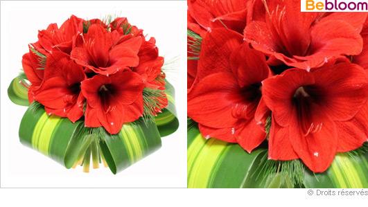 Bouquet de no l d amaryllis rouge for Amaryllis pour noel