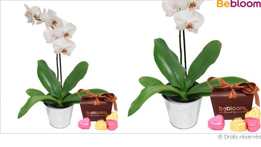 Offrir une orchidée et chocolats de noel