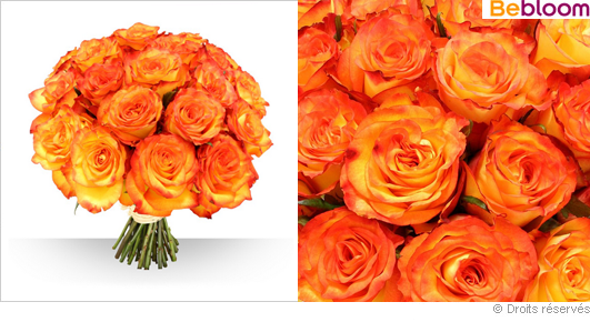 Bouquet de roses couleur safran, 21 roses gros boutons