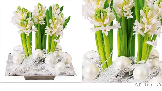 Composition de jacinthes, fleurs décoration réveillon