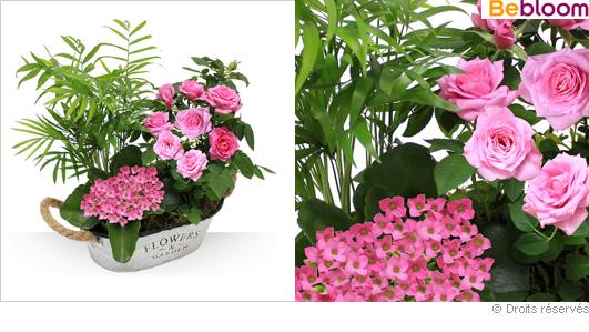 Composition plantes vertes, fleurs, roses