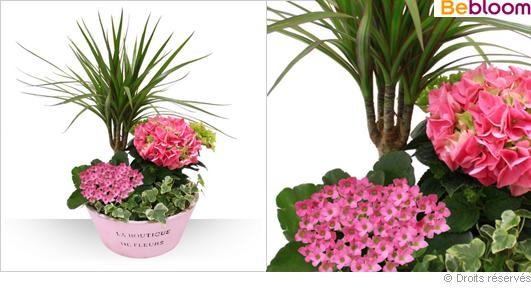 Livraison composition florale dracaena kalanchoe hortensia