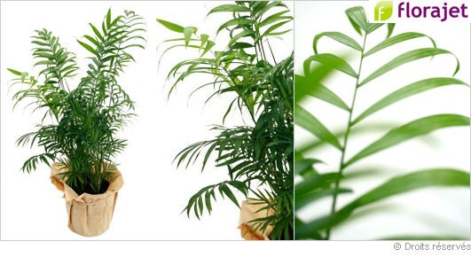 Plantes for Plante interieur verte
