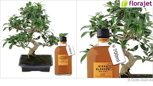 Fête des pères : Bonsai et whisky !