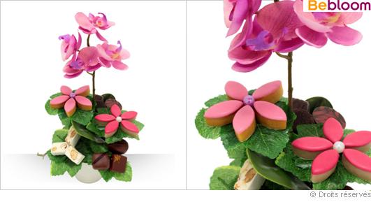 Orchidée gourmande à offrir