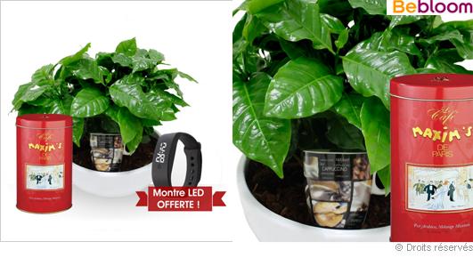 offrir-un-cafeier-plante-tropicale