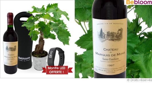 Offrir un pied de vigne, bouteille saint-emilion, fête des pères