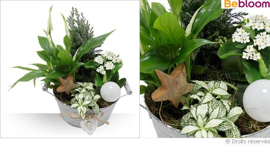 Corbeille de Noel, livraison de plantes