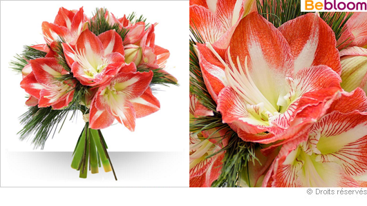 Livraison fleurs bouquet  amaryllis de Noel
