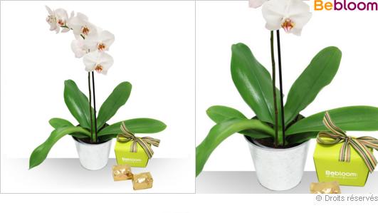 Livraison orchidées et chocolats, marrons glacés