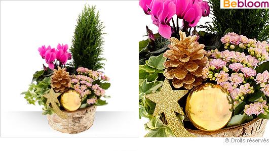 Corbeille de Noel, composition florale de plantes variées