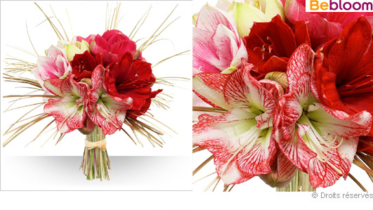 Offrir un bouquet d'Amaryllis rouge, fleurs noel